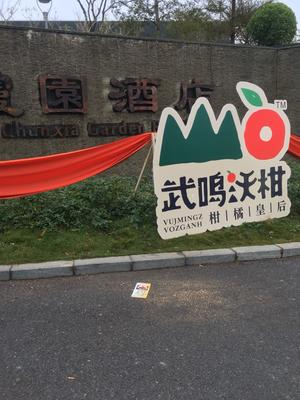 广西壮族自治区南宁市武鸣县沃柑 60.0cm 3两以上
