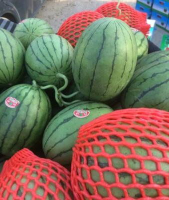 山东省潍坊市寒亭区早春红玉西瓜 有籽 1茬 9成熟 2斤打底
