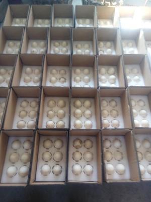 这是一张关于土鹅蛋 食用 散装的产品图片