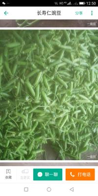 云南省保山市施甸县长寿仁豌豆 5-7cm 饱满