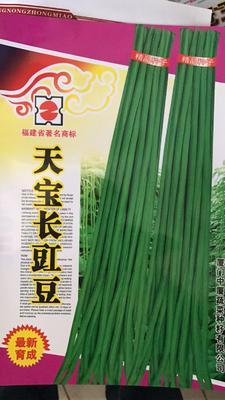 山东省济南市历城区豆角种子 ≥80%