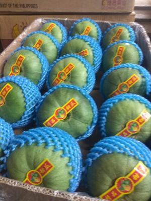 这是一张关于绿宝甜瓜 0.5斤以上的产品图片