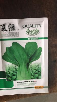 山东省济南市历城区青梗菜种子