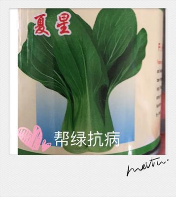 山东省济南市历城区油菜籽种子