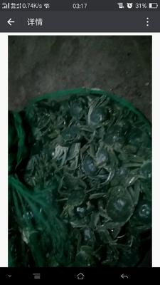 新疆维吾尔自治区石河子市石河子市野生大闸蟹 2.0两以下 统货