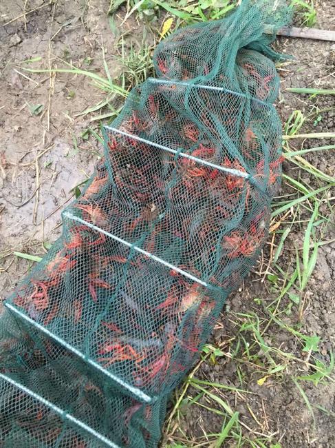 虾塘底部排污设计图