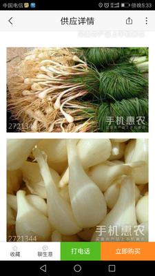 重庆九龙坡区白衣藠头