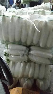 湖北省天门市天门市白萝卜 2~2.5斤