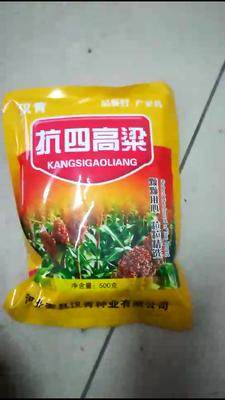 河北省石家庄市新华区抗四高粱种 种子