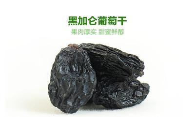 甘肃省张掖市甘州区黑加仑葡萄干 优等