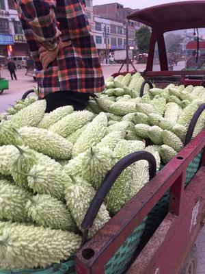 广西壮族自治区南宁市兴宁区翠绿1号大顶 25cm以上 4~6两