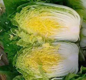 山东省青岛市平度市菊锦大白菜 3~6斤 毛菜