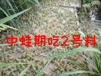 湖南省益阳市资阳区青蛙苗