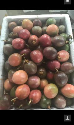 广西壮族自治区崇左市凭祥市紫红色百香果 70 - 80克