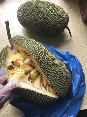 广西壮族自治区玉林市兴业县榴莲蜜