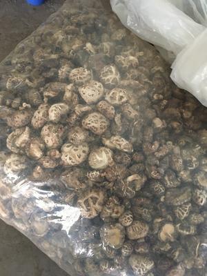 湖北省襄阳市南漳县花菇 3.0 - 3.5cm 一级