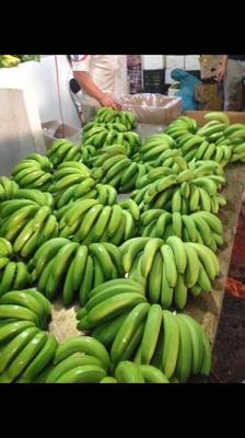 广西壮族自治区崇左市凭祥市西贡蕉 七成熟 40 - 50斤