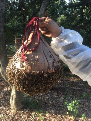 福建省宁德市蕉城区中华蜜蜂