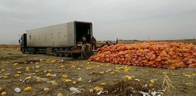 新疆维吾尔自治区石河子市石河子市中蔓 5-6斤