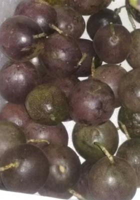 广西壮族自治区钦州市钦南区紫色百香果 50 - 60克