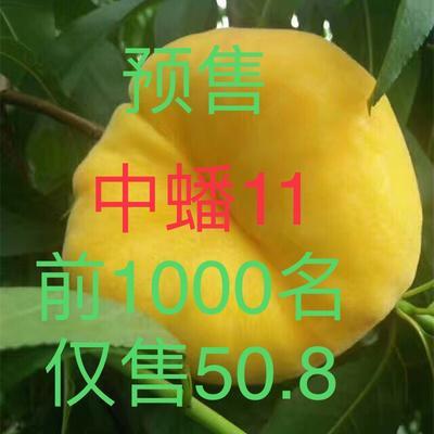 山东省临沂市蒙阴县黄金蟠 3-5两