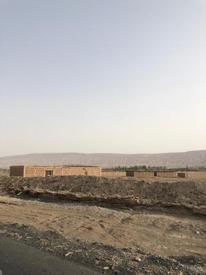 新疆维吾尔自治区昌吉回族自治州昌吉市青无核葡萄 5%以下 1次果 0.8-1斤