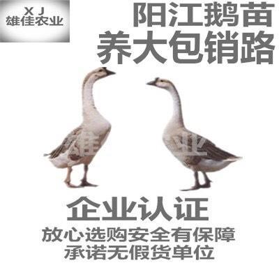 广西壮族自治区南宁市西乡塘区马岗鹅苗