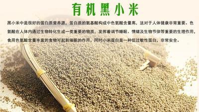 陕西省榆林市清涧县黄小米