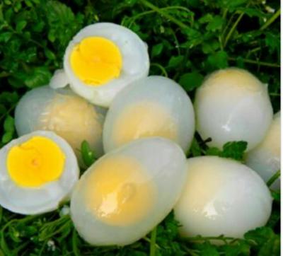 山东省德州市平原县银羽王鸽子蛋 食用 散装