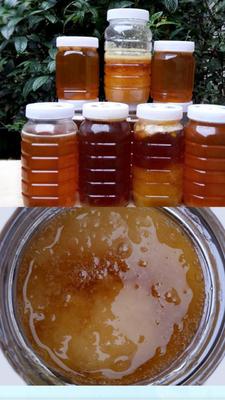 广西壮族自治区玉林市博白县百花蜜 塑料瓶装 100% 2年以上