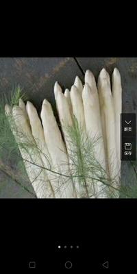 山东省菏泽市单县白芦笋 12cm以上 10mm以上