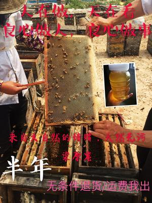 福建省漳州市平和县荔枝蜜 塑料瓶装 100% 2年