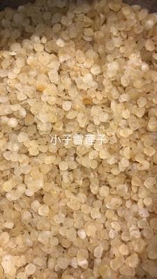 广东省广州市越秀区单荚皂角米