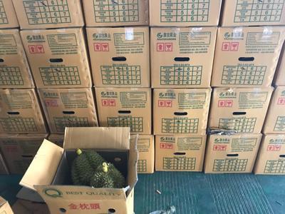 广西壮族自治区崇左市凭祥市金枕头榴莲 90%以上 4 - 5龙8国际官网官方网站