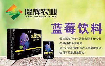 山东省青岛市黄岛区蓝莓饮料 易拉罐 12-18个月