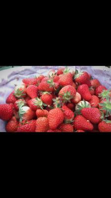 安徽省淮南市凤台县红颜草莓 20克以上