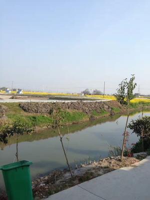 江苏省泰州市兴化市兴化大闸蟹 2.0-2.5两 统货