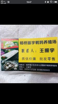 浙江省杭州市萧山区白羽鹌鹑蛋 食用 散装