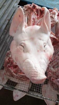 江苏省南京市江宁区新鲜猪头肉 300斤以上