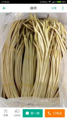 湖北省仙桃市仙桃市仙藕带 30~50cm