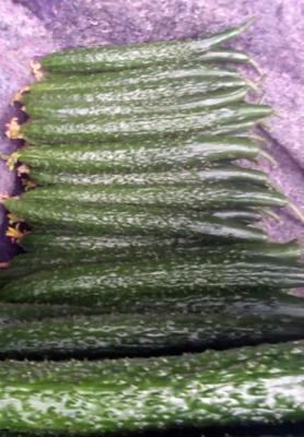 山东省临沂市费县密刺黄瓜 25~30cm 干花带刺