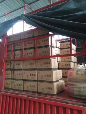 湖南省怀化市鹤城区果醋饮料 塑料瓶 18-24个月