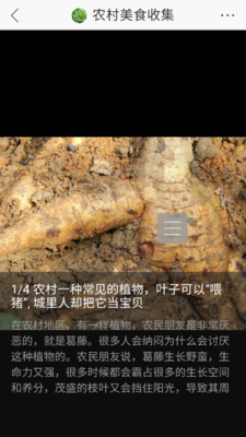 广西壮族自治区百色市乐业县野生葛根 3.0-3.5斤