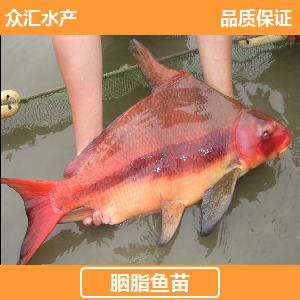 广东省广州市花都区胭脂鱼苗
