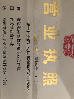 海南省澄迈县澄迈县土鸡 公 3-4斤
