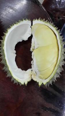 上海浦东新区金枕头榴莲 60 - 70%以上 4 - 5公斤
