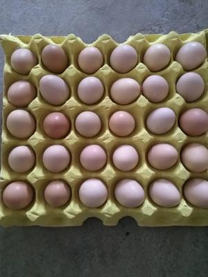 湖北省随州市曾都区初生蛋 食用 箱装