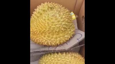 广西壮族自治区崇左市凭祥市金枕头榴莲 90%以上 3 - 4公斤
