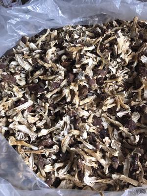 福建省宁德市古田县干巴西菇 散装 1年以上
