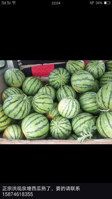 湖南省永州市蓝山县麒麟西瓜 有籽 2茬以上 8成熟 8斤打底